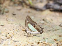 Butterfly on the ground Blurred view of natural background. Beautiful color Butterfly on the ground Blurred view of natural background royalty free stock photos