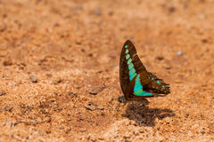 Butterfly on the ground, brown background.  Royalty Free Stock Photos