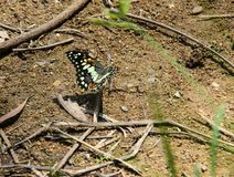 Butterfly is on the ground royalty free stock image