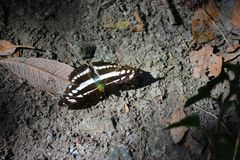 Butterfly on the ground camouflaging with the surrounding. And isolated with extra lights stock image