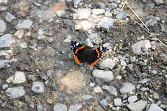 Butterfly on the ground Royalty Free Stock Photography