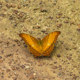 Butterfly on the ground Royalty Free Stock Photo