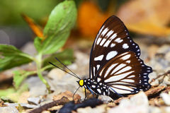 Butterfly. On ground, Phetchburi Thailand Royalty Free Stock Photo