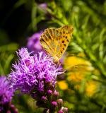 Butterfly on groundorange butterfly on flower stock image