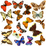Butterfly group Royalty Free Stock Photo