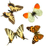 Butterfly group royalty free stock image