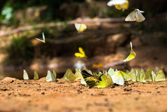 Butterfly group on the ground Royalty Free Stock Images