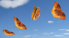 Butterfly Group with Paths Stock Image