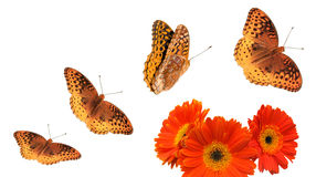Butterfly Group with Paths Stock Photos