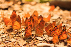 Butterfly group Stock Photos