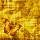Butterfly on grunge Royalty Free Stock Photos
