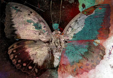 Butterfly. Grunge image background texture royalty free stock photos