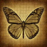 Butterfly Grunge texture Stock Images