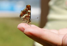 Butterfly on a hand Royalty Free Stock Photo