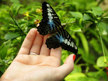 Butterfly hand Stock Photography