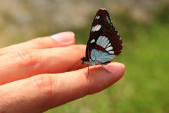 Butterfly on hand. A white and brown butterfly resting on the finger of a hand stock photo