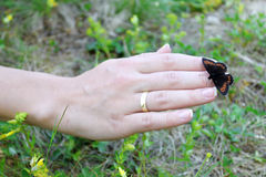 Butterfly on a Hand. Small butterfly sitting on a female hand. The insect has black wings with brown dots. Green grass background Stock Image