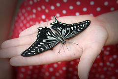 Butterfly on a Hand. Big Butterfly on a Child Hand Stock Photo