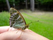 Butterfly on the hand Royalty Free Stock Photography