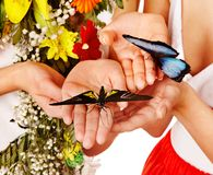 Butterfly on hand. Stock Images