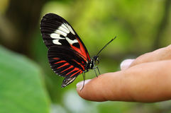 Butterfly on Hand Stock Photos