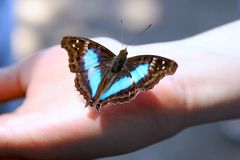 Butterfly in hand Stock Images