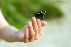 Butterfly on hand Royalty Free Stock Image