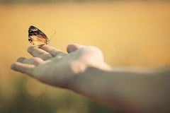Butterfly in hand. Beautiful butterfly sitting on the hand Stock Images