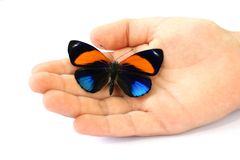 Butterfly in hand of child Stock Photography