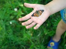 Butterfly on the hand of a child. Butterfly painted lady on the hand of a little child. Ð¡ontact with nature. Butterfly on the hand of a child. Butterfly royalty free stock image