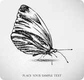 Butterfly hand drawing.Vector Stock Photos