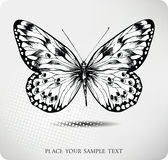 Butterfly hand drawing.Vector Stock Photo