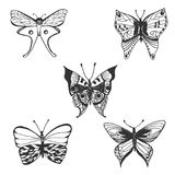 Butterfly, hand drawn vector illustration Stock Image