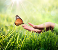 Butterfly in hand on grass. Eco sustainable concept Royalty Free Stock Photo