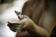 Butterfly and hand. Butterfly landing on a man's hand Royalty Free Stock Image