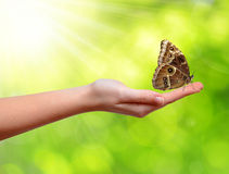 Butterfly on the hand Royalty Free Stock Image