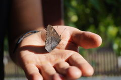Butterfly. In the hand nature Stock Photography