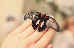 Butterfly on hand Stock Images