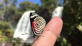 Butterfly on hand over rapids sound at Iguazu waterfalls stock video footage