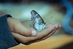 Butterfly on hand Royalty Free Stock Photo