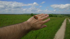 Butterfly on hand stock video footage
