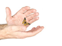 The butterfly in the hand Stock Photo