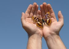 Butterfly in hands Stock Images
