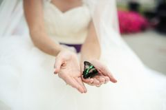 Butterfly. In hands at the bride Stock Images