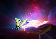 Butterfly in hands Stock Image