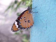 Butterfly hanging on white cement wall Royalty Free Stock Photos