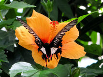 Butterfly Haus on the Island of Mainau in Konstanz, Germany Royalty Free Stock Photography