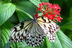 Butterfly having meal on flower stock images