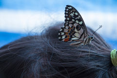 Butterfly on head Royalty Free Stock Image