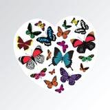 Butterfly heart pattern Stock Image